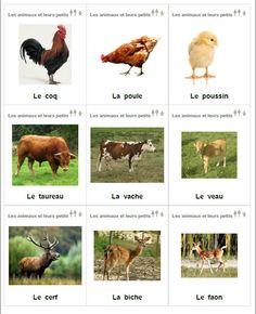 Les animaux et leurs petits