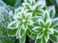 Které byliny vydrží zimu venku?