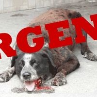 Help to prevent another massacre, sign and share!Voting will be on the 23th!   BOSNIA IS ABOUT TO IMPLEMENT A KILL LAW THAT REPLICATES WHAT IS HAPPENING IN ROMANIA - If IMPLEMENTED IT WILL MEAN WHOLESALE SLAUGHTER OF STRAYS. TO STOP THIS LAW COMING INTO EFFECT IT IS CRITICAL WE LOBBY THE BOSNIA-HERZEGOVINA AUTHORITIES NOW.