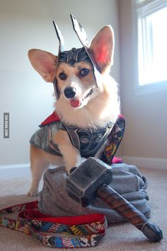 Corgi + Thor = Thorgi!  I should dress my corgi up like Wonder Woman!