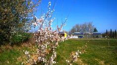 Ya hemos damos la bienvenida oficialmente a la primavera. Una época en la que la finca y sus alrededores se ponen floridos e increíblemente bonitos. De momento os dejamos con esta foto, en los próximos días os iremos enseñando más fotos de la finca para que podáis disfrutar con nosotros 😋🌿🍃🌸🌷 #Josenea #DelCampoALaTaza #Finca #Bordablanca #Bienvenida #Primavera #Welcome #Spring #Plantas #Plants #Ecológico #Organic #Florido #Flowery #Naturaleza #Nature