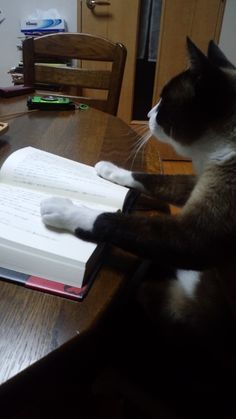 """* * """" Will ya quit interruptin'? I looze me place and haz to re-read de sentence."""""""