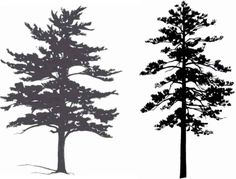 Tree Silhouettes - Small Tree - Medicinal Plants Archive