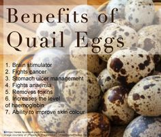 Big Benefits of Quail Eggs