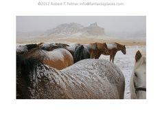 Original signed photo of huddled horses by FantasticPlacesPhoto, $26.00