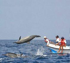 #Dolphin_watching #goa