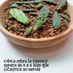 catus y suculentas Mini Cactus Garden, Succulent Gardening, Cacti And Succulents, Garden Pots, Gardening Tips, Cactus Planta, Cactus Y Suculentas, All Plants, Green Plants
