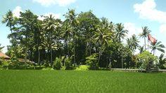 En Bali vas en coche hacía el campo y te encuentras con paisajes espectaculares por todos lados | OTW to Abiansemal