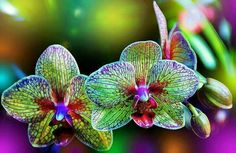 I have an absolute passion for unique orchids. I hope you enjoy them as much as I do.