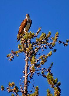 Island Park, Idaho: http://globaltravelsblog.com/travel-adventures/experience-yellowstone-national-park-stay-island-park-village/