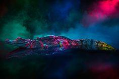 Caiman Crocodilus – Des photographies de caïmans fascinantes et colorées (image)