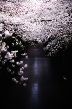 Tokyo Japan  Amazing shot by Kazu Sakai.