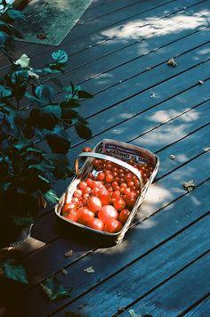 nature/vintage blog