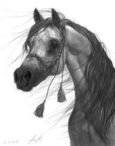 Arabian Horse by aleksandar - another beautiful drawing. Horse Drawings, Animal Drawings, Beautiful Horses, Animals Beautiful, Arabian Art, Arabian Horses, Horse Artwork, Horse Paintings, Horse Photos