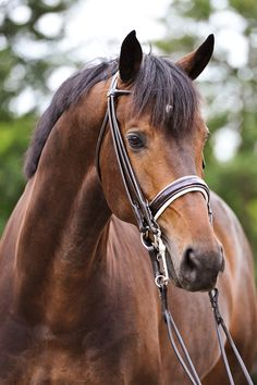 The Premiera Rome is a beautiful double bridle with elegant rolled details and a wide soft patent leather noseband. With rolled cheeks, throat, flash, rein fronts, and a rolled browband, the Rome a sp