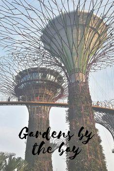 Why Singapore should be your next destination?  #travelasia #travel #singapore #gardensbythebay