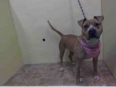 Manhattan Center    JUSTICE - A0997421    FEMALE, TAN / WHITE, BOXER MIX, 4 yrs  OWNER SUR - ONHOLDHERE, HOLD FOR ID  Reason PERS PROB   Intake condition NONE Intake Date 04/22/2014, From NY 10466, DueOut Date 04/22/2014, I came in with Group/Litter #K14-174732.  https://www.facebook.com/Urgentdeathrowdogs/photos_stream