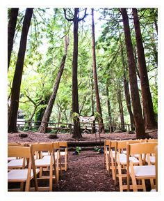 I love the idea of having a wedding in the woods.