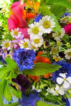 Fabulous Flowers by Diane Devine