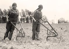 Vintage photo of young women breaking the soil with hand plows (wheeled plough) circa 1920 - 1930.