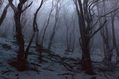 Photography Winter Forest Dark Ideas Source by tubbytaku Source by tubbytaku …