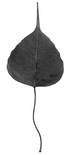 Bodhi Leaf, Bodh Gaya, India (c) Elizabeth Avedon