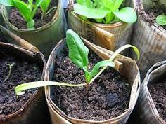 Easy tips for starting your seeds indoors - Mother Earth News