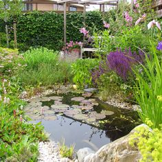 Amazing Houses, House Plants, Stepping Stones, Water, Outdoor Decor, Ponds, Gripe Water, Stair Risers, Indoor House Plants