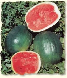 Growing Watermelons Tips