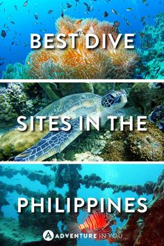 Philippines Diving | Planning on traveling to the Philippines? Consider exploring their many famous dive sites from underwater shipwrecks to seeing large pelagics. Diving in the Philippines is world class!