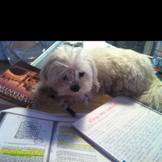 Studying......maddie girl always does this :)