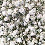 Bulk Floral - Sam's Club // @ncmomof5 says this is a great place to get flowers!
