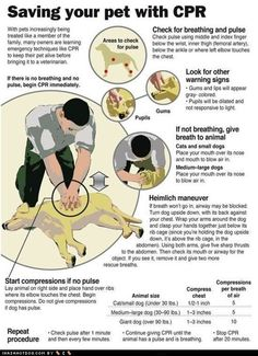 How to do CPR on your dog - useful to look at, perhaps visit their page...you never know when you might need this!