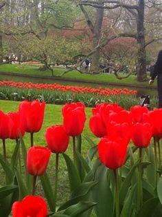 Photo of Amsterdam Keukenhof Gardens and Tulip Fields Tour from Amsterdam Keukenhof Gardens, The Netherlands