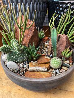 Super Natural, Plant Design, Cacti And Succulents, Garden Plants, Bonsai, Cactus, Projects To Try, Terrarium Ideas, Mini Gardens