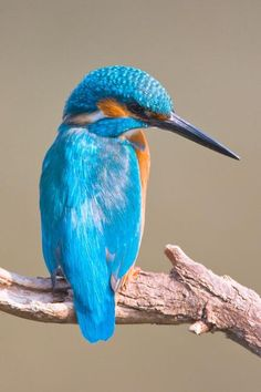 Beautiful kingfisher My favourite small bird Iridescent colours are striking when seen flying low over the water