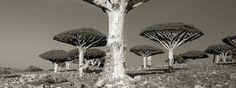 Estas Son Las Criaturas Más Antiguas De La Historia ¡Te Sorprenderán! - #¡WOW!, #lugares, #Vida  http://www.vivavive.com/arboles-antiguos-y-sorprendentes/