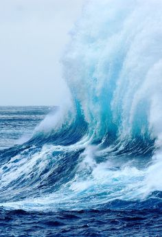 Majesty in WAVES!