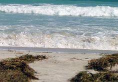Meer: Wohltuend und gesund
