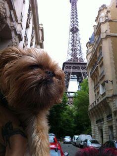 hanzobladeofsteel: Eiffel Tower!!!- Love this! #dogs
