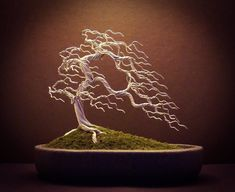 a the Island Project. This is a large showpiece Wire Bonsai scene made up of ten different gold wire Bonsai trees on three towers of deadwood. Wire Bonsai tree sculpture made by Steve Bowen Bonsai Tree Price, Buy Bonsai Tree, Japanese Bonsai Tree, Bonsai Trees For Sale, Bonsai Tree Care, Bonsai Tree Types, Tree Sale, Bonsai Wire, Wire Tree Sculpture