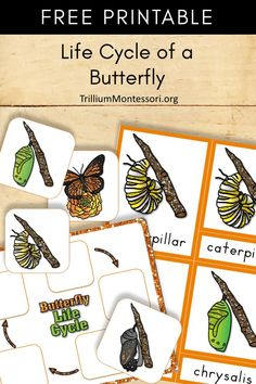 Free printable: Life cycle of a butterfly