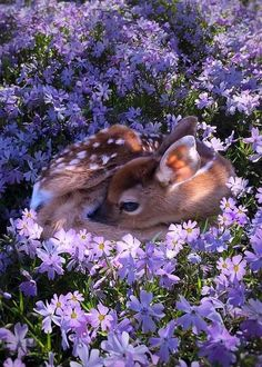 Beautiful dear