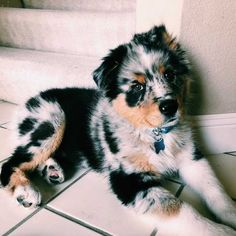 231e636be00 420 best Fuzzy buddies images on Pinterest in 2018 | Cute baby dogs ...
