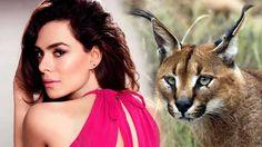 Ünlü oyuncular Özge Özpirinçci ve Buğra Gülsoy, Marmaris'te dizi çekimleri sırasında buldukları nesli tükenme tehlikesi altında olan 4 aylık yavru bir karakulağa yardım elini uzattı. Detaylar ajanimo.com'da.. #ajanimo #ajanbrian #hayvan #animal #ozgeozpirincci #prettyphotography