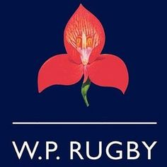 Rugby Pictures, 50th Birthday, Westerns, Logos, Sport, Deporte, 50th Anniversary, Logo