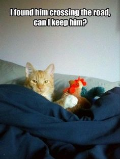 Oh...so that's why you weren't at church today!  Get your tail out of bed!