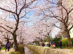 哲学の道 ( 京都 ) / Promenade du philosophie ( Kyoto )