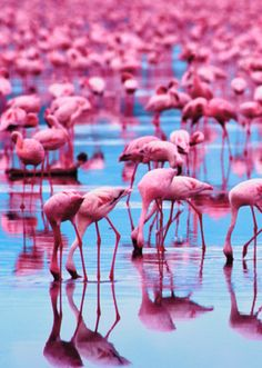 Fun fact there are more plastic flamingos than real flamingos in the world
