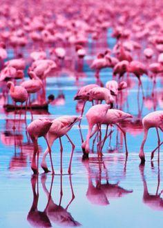 Flamingos #Galapagos | A Stand of Flamingos WOW!!!